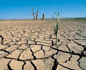 113-afecta-falta-lluvia-campo